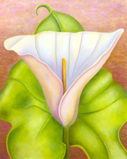 Dance With Me - Calla Lily