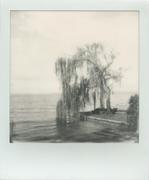 Tree at lake