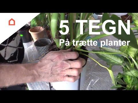 Bestil den bedste Plantejord her i 2021 ved Plantejord.dk - alt om plantejord