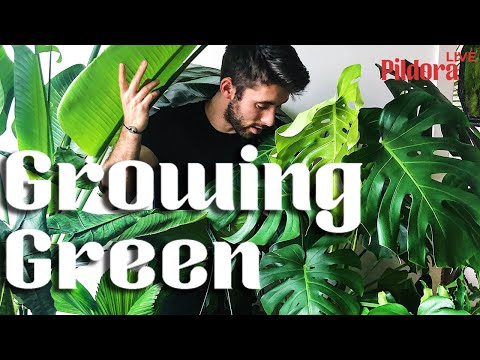 Growing Green with @Farmernick | Planting Indoors with Nick Cutsumpas on Pildora Live