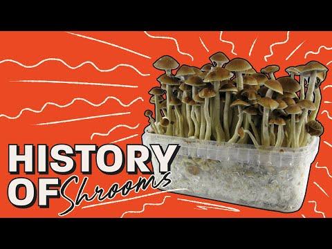 Drugerie Market Australia | Buy vape carts Australia-Buy Mushrooms