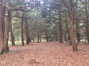 Slindon Woods circular (Bluebell walk) 29 April 2021