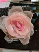 primeira rosa / first rose