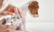 Everything You Must Know About Vaccinating Your Dog