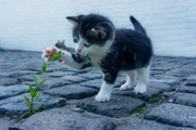 10 Surprising myths and facts about cats and dogs that EVERY pet parent should know