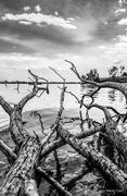 Τα κλαδιά της λίμνης