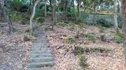 Jardin vue de la foret