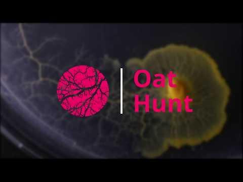 Physarum Polycephalum | Oat Hunt