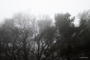 Landscape in the fog 2