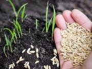 *Free Seeds for Gardening