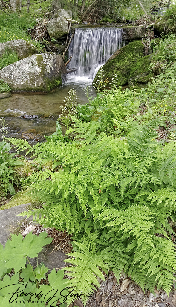 Ferns and a Small Waterfall