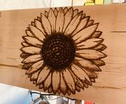 Long hive sunflower