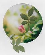 Romanticismo non è regalare le rose. Romanticismo significa coltivarle. Alda Merini