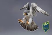 TCV Bird Survey - The Paddock Community Nature