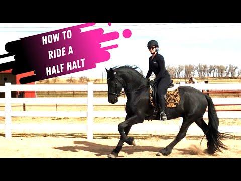 How Do You Ride A Half Halt In Dressage?