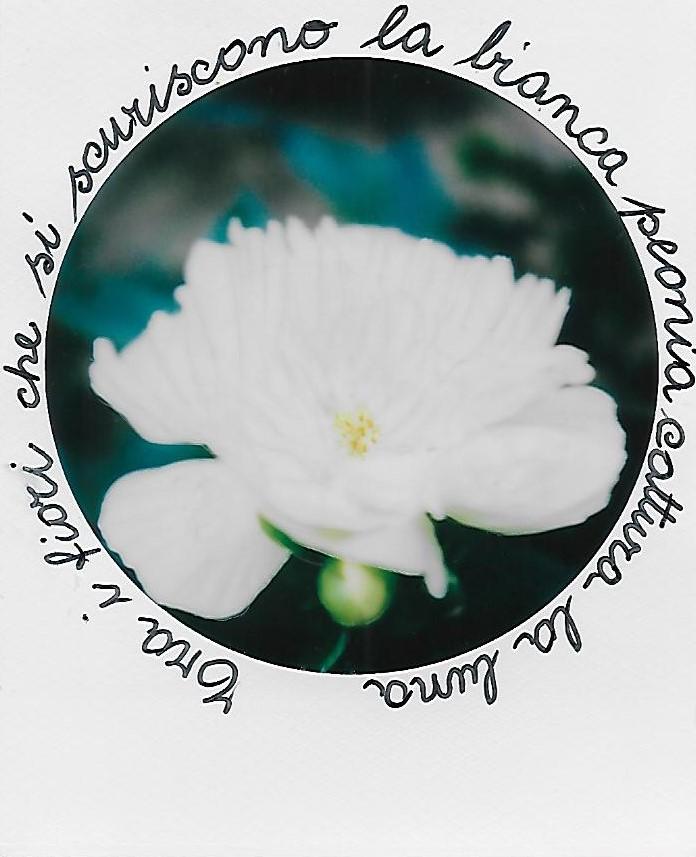 Tra i fiori che scuriscono la bianca peonia cattura la luna. Kato Gyodai