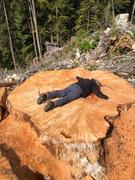 Protect our old growth