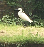 New river Visitor