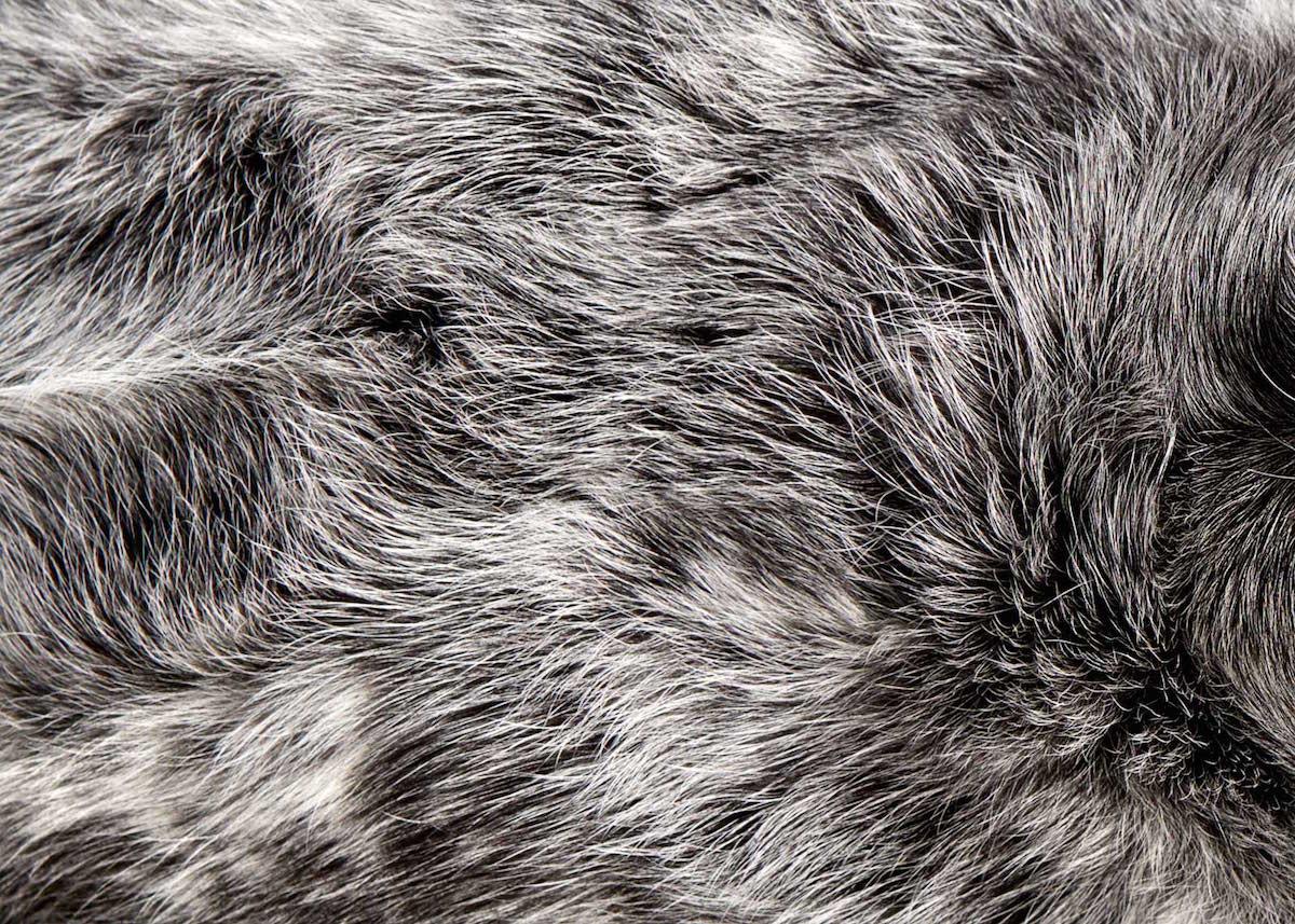 ძაღლის თმა, ძაღლის ბეწვი, თმის კოლექცია, ბლოგი, ფოტოგრაფია, Qwelly, blog, dog hair, photography