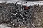 la bicicletta dimenticata