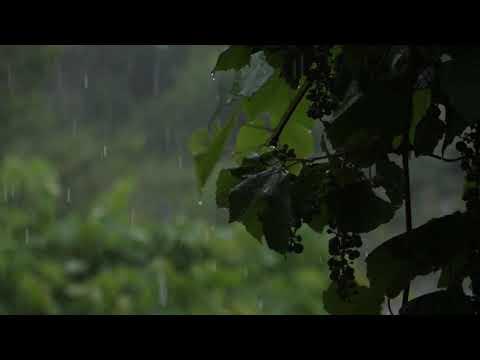 RAIN SOUND MUSIC FOR RELAXATION, DEEP SLEEP, STUDY, MEDITAION, HEALING, SPA, YOGA, CALMING NERVES