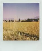 Tra il cielo e il grano