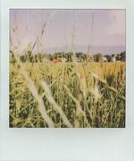 Oltre il grano