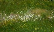 June 10 2021 wildflowers