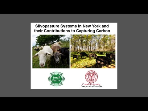 Silvopasture Systems in New York and Their Contributions to Capturing Carbon (webinar)