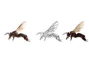ตัวผึ้ง เส้น_สี_2 final-01