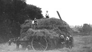 Haymaking in Crouch End, c1900