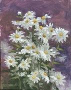 Johnstown daisies