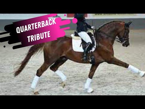 Quaterback Elite Dressage Stallion Tribute (2003 - 2021)