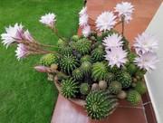 fioritura generosa 2