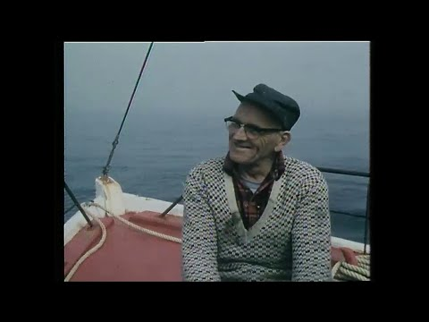 The Irish in Newfoundland, 1981