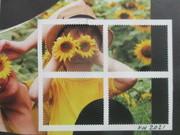 Sunflowers Break