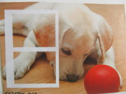 Dog 'n Ball Break