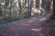 Portola Redwoods Nature Club