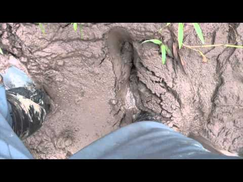 Why you Must Wear Rubber Boots - Stuck in the Mud of the Amazon Jungle
