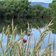 Grasses at Twin Lakes
