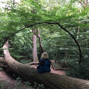 Forest Bathing in Queen's Wood - nature wellbeing session