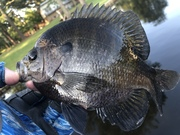 Great Dynamics on These Fish…..7/11/2021