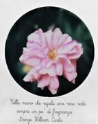 Nella mano che regala una rosa resta sempre un po' di fragranza. G. W. Curtis