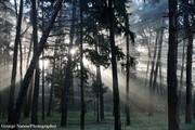 Πρωινές ηλιαχτίδες#2