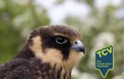 Free Bird Survey Workshop - The Paddock N17