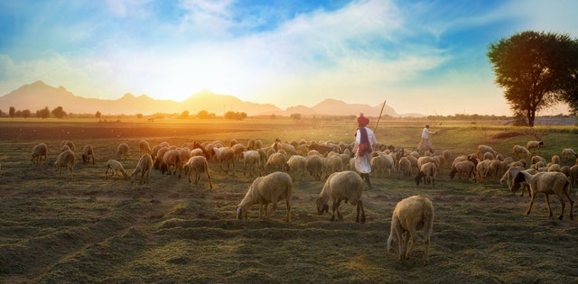 Daily Devotional: Sheltered in the Shepherd's Love