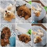 Den & Paul Pet Care