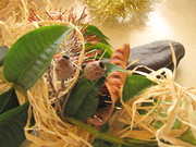 Naturally Cute Christmas Decorations workshop for Children