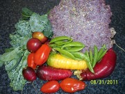 Compost,Worms and Soil