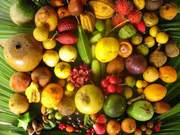 President of the Australian Rare Fruits Association will give a  talk